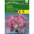 Pelargoni Horizon Blueberry Ribble F1